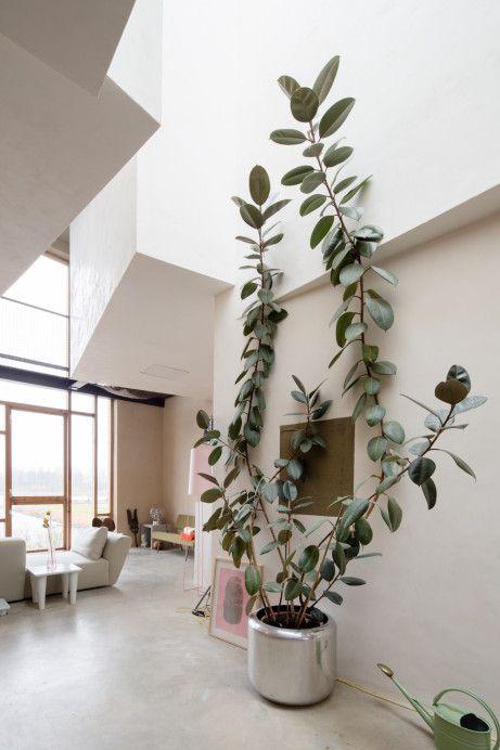 picturesque best large house plants. Joris Brouwers  Nicky Zwaan Big PlantsBig House 54 best HOUSEPLANTS images on Pinterest Green plants Indoor