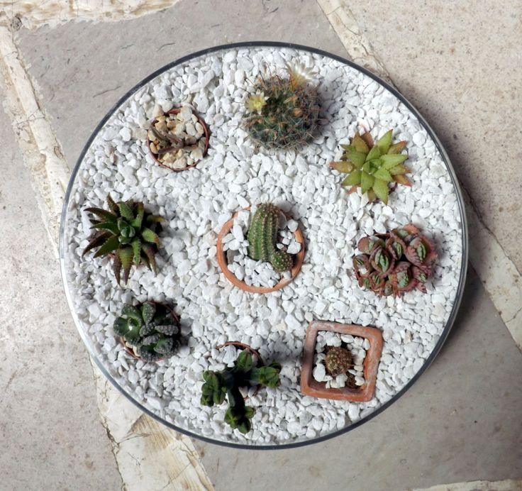 1000 ideas about mini cactus garden on pinterest cacti for Does ikea deliver same day