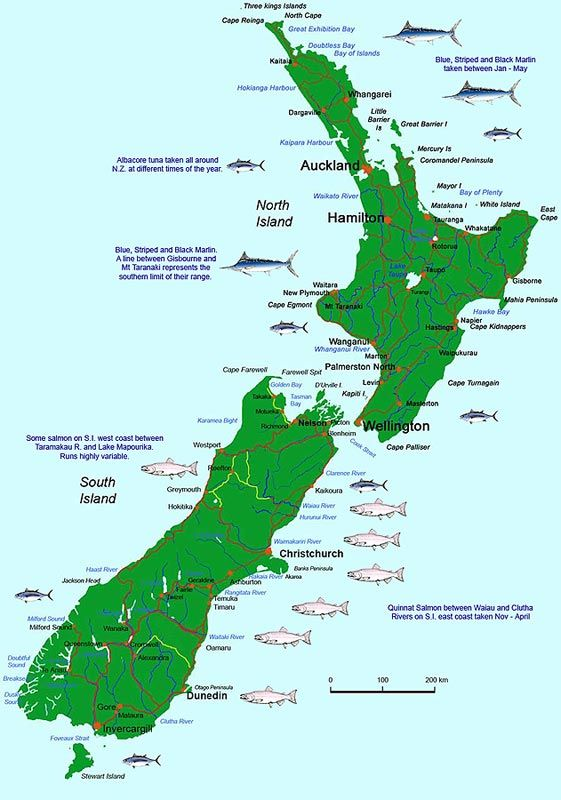 Map of New Zealand showing the general locations where sports fish can be caught. Brown and rainbow trout are caught in both the North and South Islands. The central North Island trout fishery centered around Taupo and Rotorua is very substantial. Salmon only in the South Island and mostly on the east coast where they run the main rivers in summer and autum. Billfish are caught mostly in the upper North Island. Snapper are mainly a North Island species, where the sea is warmer, with some…