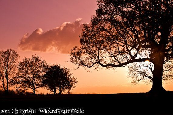 orange sky silhouette landscape | Sunset Photography, Pink Sunset, Silhouette, Tree, Pink Sky, Orange S ...