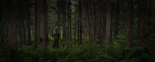La misteriosa foresta di Cannock Chase