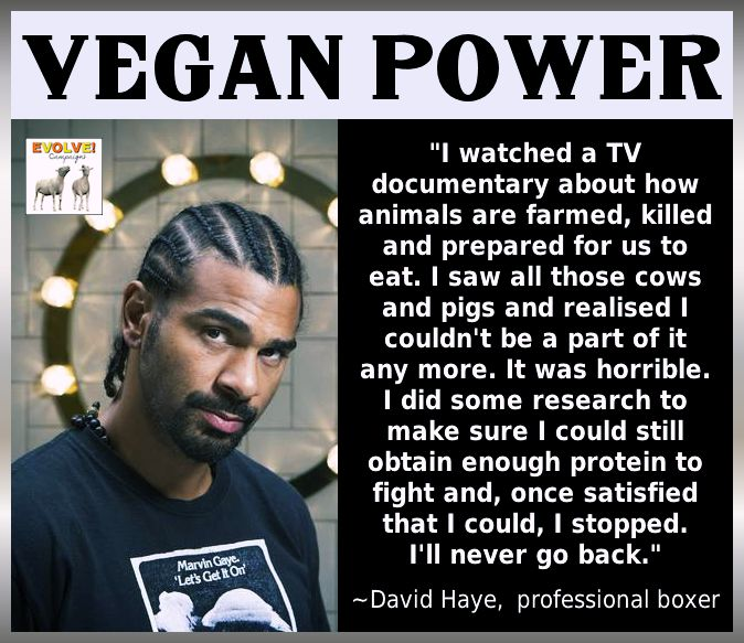 We're All Animals: Vegan Stories: Professional Boxer David Haye