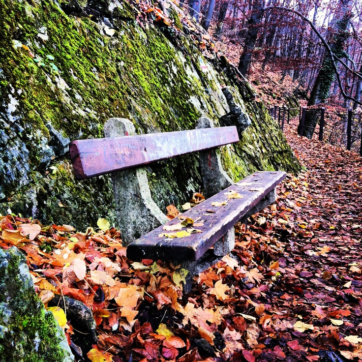 whisper to me a lullaby of strength & desire <3  a bench along a walk in Lillafüred, Hungary