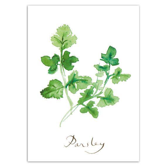 Parsley Print Herbs Kitchen Wall Art Watercolor Food