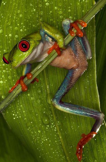 Deze kleurrijke kikker maakt je dag weer goed!