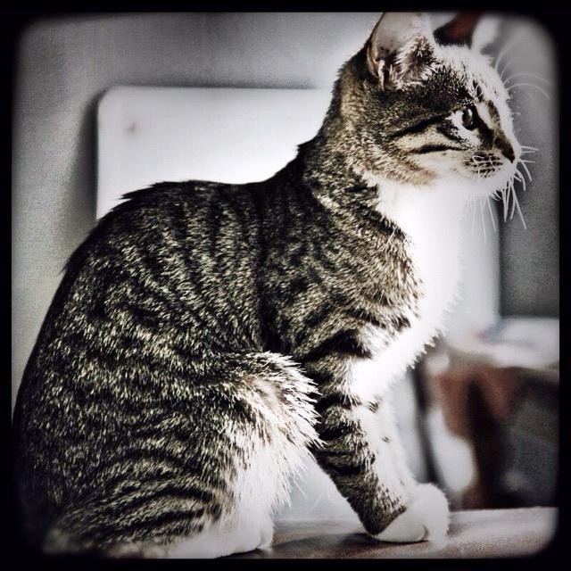 Miss Tiger/lone.meldgaard
