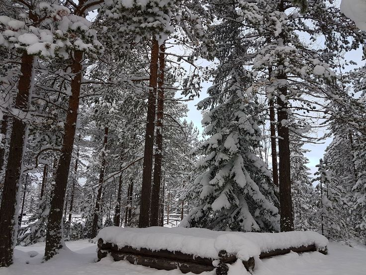Sweden in Pictures 9 – Winter Forrest Photography