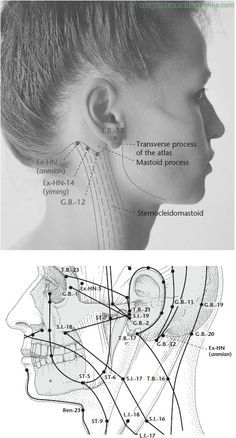 Ex-HN Peaceful Sleep ANMIAN - Acupuncture Points   Acupuncture ...
