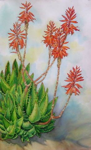 Botanical Plein Air Watercolor Painting, Aloe Nobilis, African flower painting of blooming aloe by Elena Roche