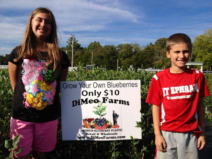 Pas Love Bringing Their Kids To Blueberry Plants Direct From Our Family Farm Where Plantblueberry Farmfarm Nurseryberry