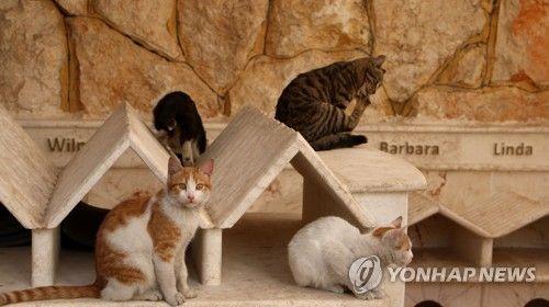 SYRIA PHOTO SET ALEPPO CAT SANCTUARY  ||  Cat sanctuary in Aleppo Cats play at 'Ernesto's House' cat sanctuary in Aleppo, Syria, 08 February 2018 (issued 19 Febru http://news.naver.com/main/read.nhn?aid=0006365744&oid=091&utm_campaign=crowdfire&utm_content=crowdfire&utm_medium=social&utm_source=pinterest