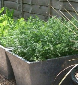 how to grow vegetables in pots malaysia