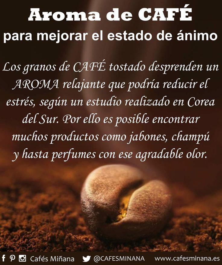 Estudios sobre el #olfato, realizados por diversas Universidades de todo el mundo, demuestran que el #aroma de los granos de #CaféTostado desprenden un #AromaRelajante que podría reducir el #estrés. Por ello es posible encontrar muchos productos como jabones, champú  y hasta perfumes con ese #AgradableOlor.  #CafésMiñana #Sabíasque #aromadecafé #coffeebeans #coffee #reducirelestrés #mejorarelestadodeánimo #cafe #coffeebeans #cafetostado #roastcoffee