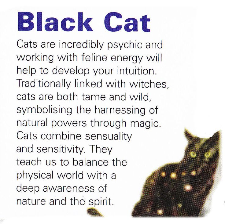 Black cat spirit guide.  :) if you really knew me you would know why I find this so damn interesting