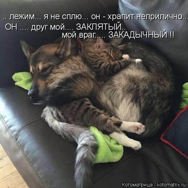 .. лежим... я не сплю... он - храпит неприлично... ОН .... друг мой.... ЗАКЛЯТЫЙ.. мой враг..... ЗАКАДЫЧНЫЙ !!