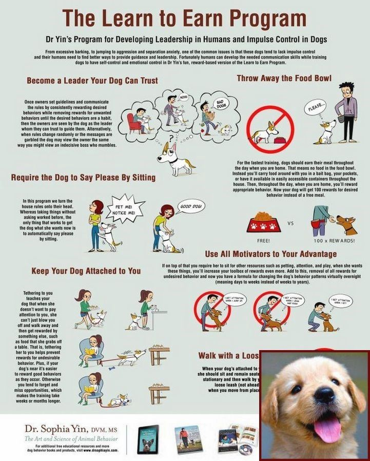 Dog Behavior Vocabulary And Dog Training Courses In Delhi With