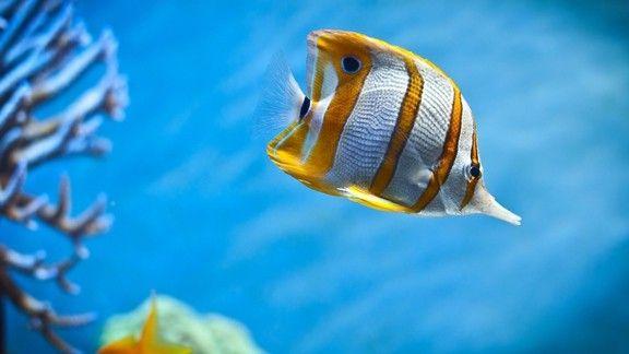 Tropikal Balık #wallpaper #fish #tropikal #deniz #sea #balık
