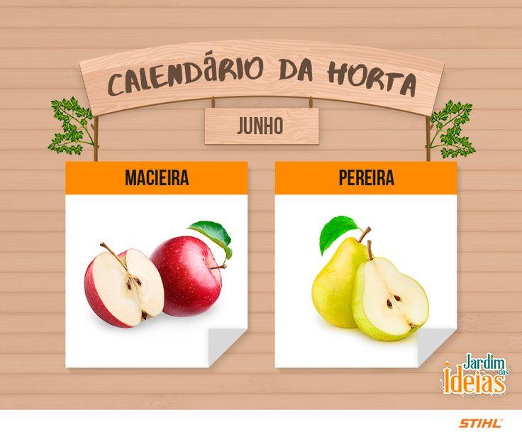 Para o mês de junho cultive macieira e pereira que dão frutos de maçã e pera, respectivamente.