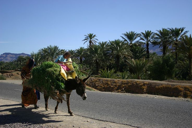 Morocco_people