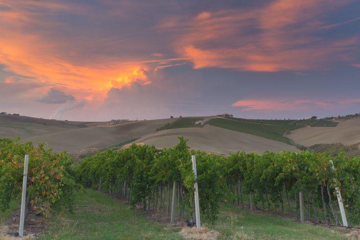 Panorama delle colline di Staffolo, nei Castelli di Jesi. Questa è la Terra dove nasce il #Verdicchio. #Marche #Italianwine #Terroir #Destinazionemarche.