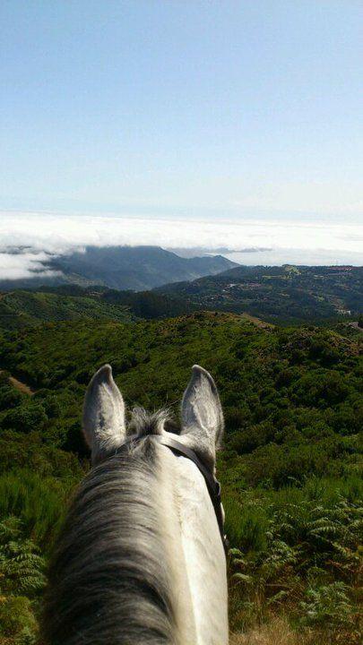 Madeira Island is such a lovely place! #horse #madeira #landscape #mountains #bergen #montagne #landschaft #paysage #pferd #cheval