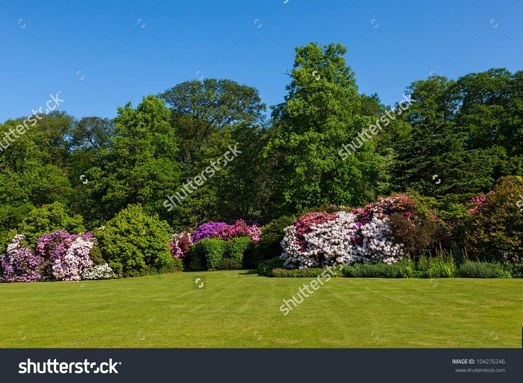 stock-photo-rhododendron-azalea-bushes-and-trees-in-beautiful-summer-garden-in-the-sunshine-104276246.jpg (1500×1100)