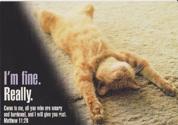 Collectible Postcard Cat Stretched Out Comfortably on the Carpet FREE SHIPPING