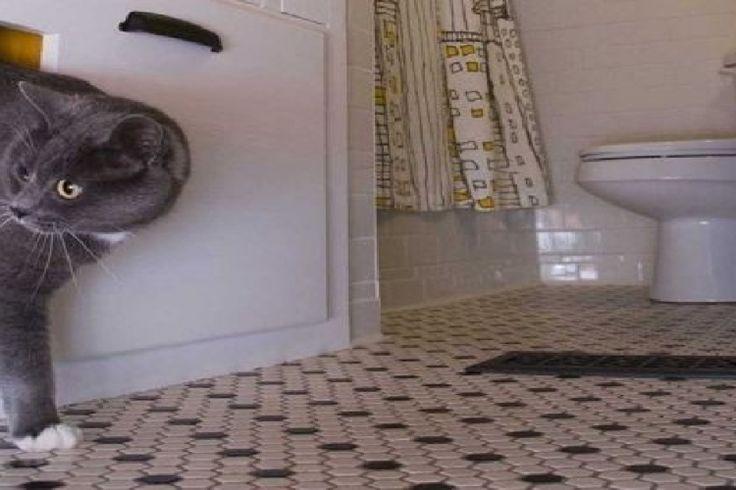 les 25 meilleures id es de la cat gorie cacher les liti res sur pinterest liti res hidden. Black Bedroom Furniture Sets. Home Design Ideas