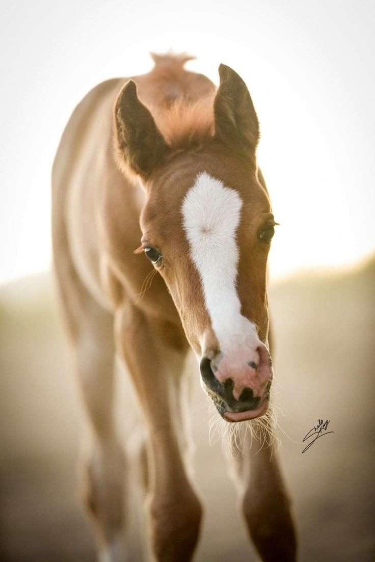 Horse, curious foal. What an adorable face!