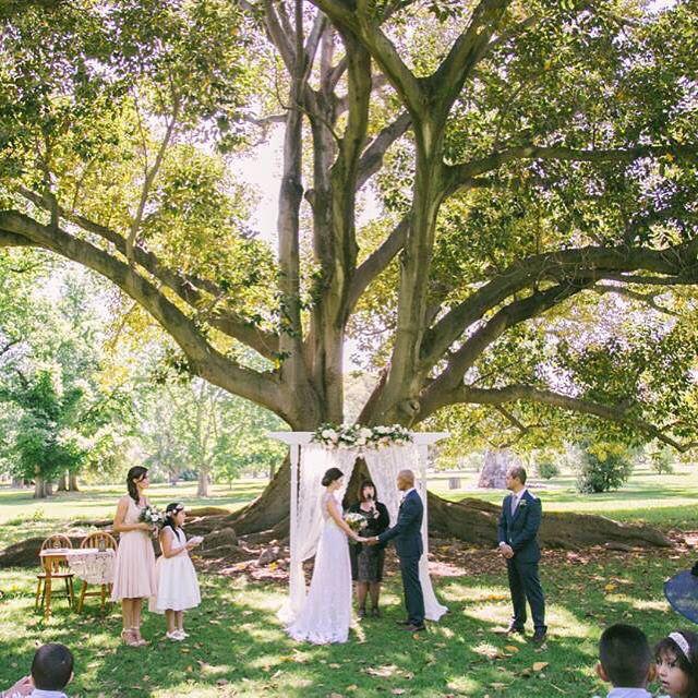 The Amazing Old Trees At Botanic Park In Adelaide ParkOld TreesGarden WeddingsPark InThe AmazingWedding Ceremony
