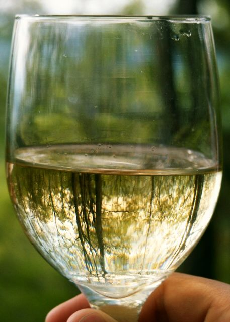 reflected.White Wines, Clear White, Calories Counting, Red Wine, Gorgeous Trees, Beautiful Landscapes, Wine Lovers, Beautiful Clear, Calories White