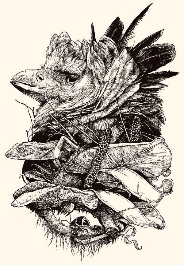 harpy eagle tattoo - Pesquisa do Google | Tatuagem