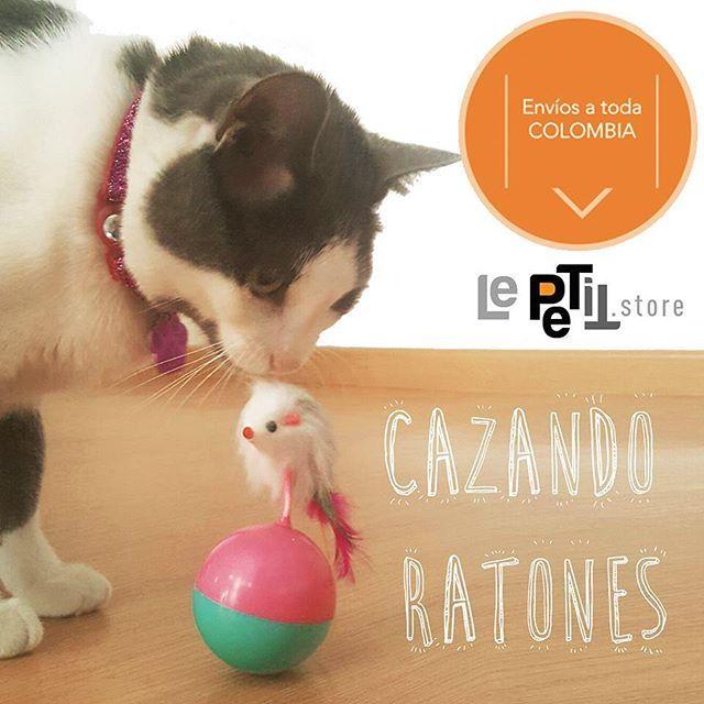 Juguetes para #gatos  cómpralo en #LePETitstore #tiendaonline de accesorios para #mascotas