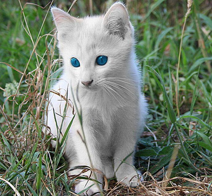 albino cat | Cat/kittens | Pinterest