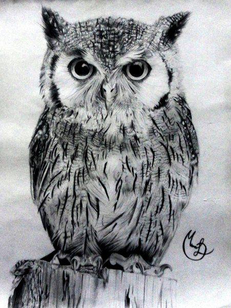 Buho - Animales | Dibujando.net