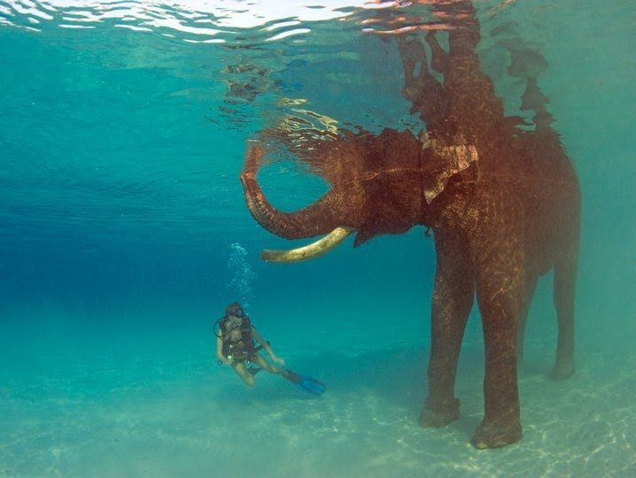 Swimming with Elephants in Thailand.