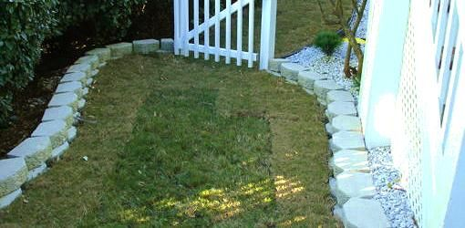 Find out how to keep newly laid sod grass alive in your yard through proper watering, laying, pest control, disease control.