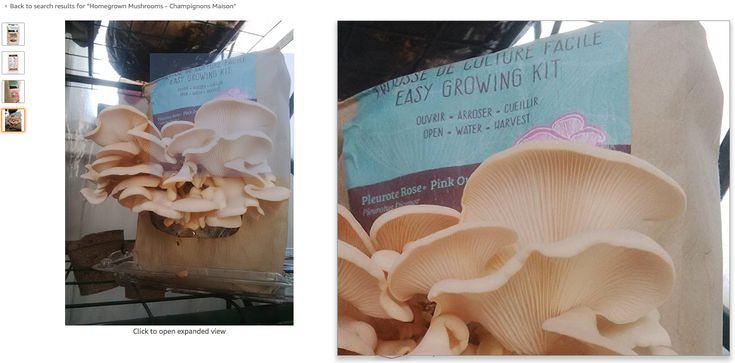 Our #MushroomGrowing kits are also available via Amazon, did you know? Click to see them: https://goo.gl/ZzFNh5  #FunFriday #Mushrooms #Fungi #HGFungi #PinkOyster