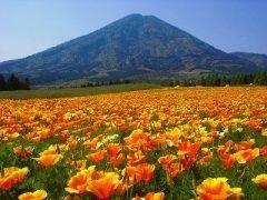 宮崎県小林市生駒富士夷守岳 九州の霧島連山北東部にある夷守岳(ひなもりだけ)生駒高原から見るその形は富士山ですよ その雄大な山は裾野の生駒高原に咲く花と一緒に見るのが一番きれい いやそれしか見てないんだけども  山登りも可能でたくさんの登山者でにぎわうそうです tags[宮崎県]