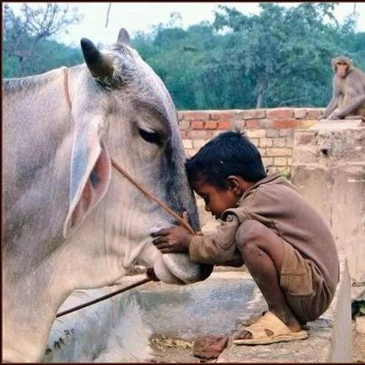 The love and respect towards cow. Yes, we Indians are proud of it that we not only love cats and dogs but all other creatures.