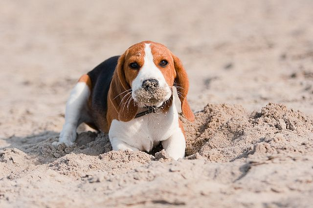 I remember that I buried it, but I just can't remember where.  Oh, that's OK, I'll just keep digging until I find it!!!  Mommy will be so proud!
