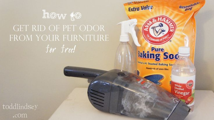 Good Bye Pet Odor! How to get rid of pet odor from your furniture for FREE!