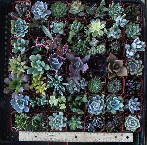 9 Misc Succulents, http://www.amazon.com/dp/B005WCKBQO/ref=cm_sw_r_pi_awd_hlNfsb07JVQTV
