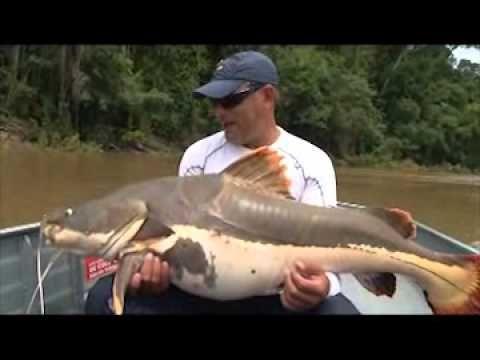 Pirarara 50k Rio Teles Pires.wmv - Programa Destinos de Pesca