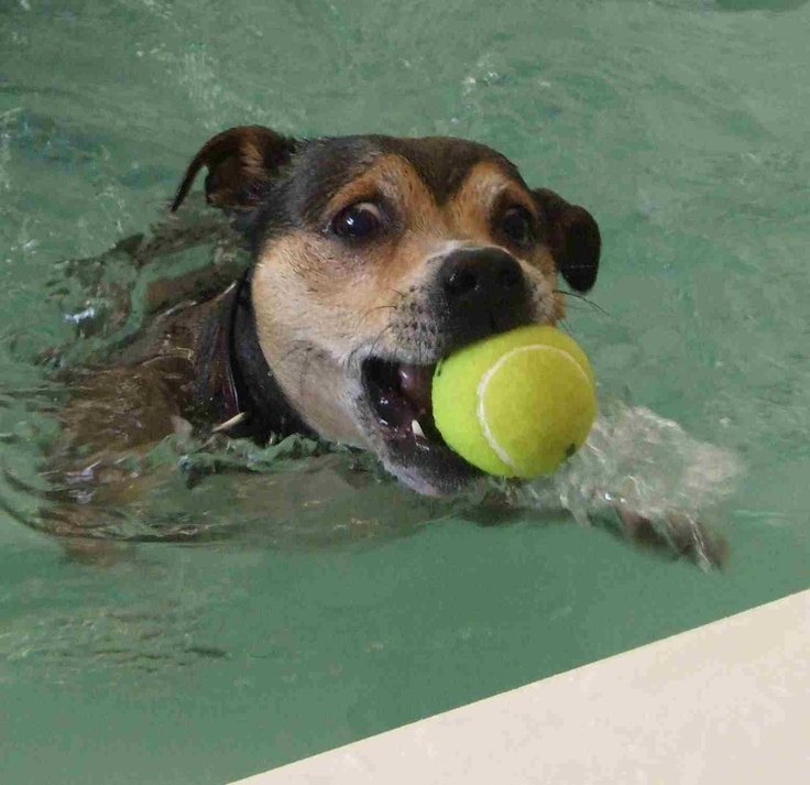 ball games at hydrotherapy