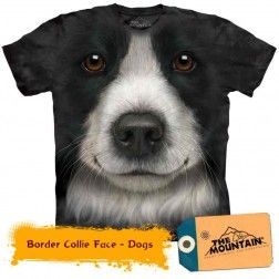 Border Collie Face - Dogs