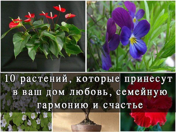 10 rostlin, které přinesou lásku do vašeho domova.  0