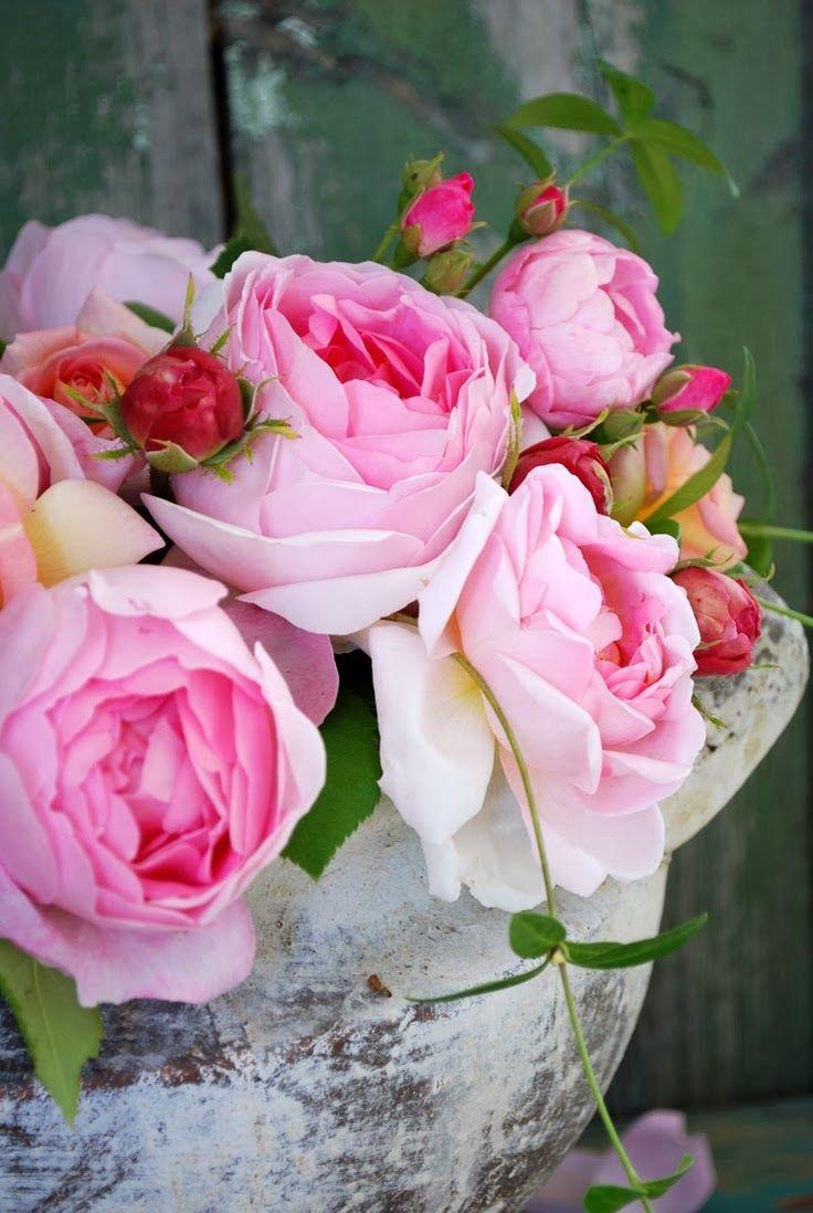 New Wonderful Photos: Pink Sweet Roses..