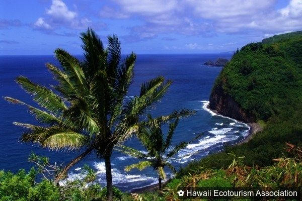 Love to eat local? All of @temptationtours tour packages use locally sourced goods! #ecotourism  #sustainability  #green  #travelpono  #Hawaii  #LetHawaiiHappen  #tourism  #travel  #Maui  #ocean  #coast  #palmtree  #beautiful  #nature  #eatlocal  #farmtotable