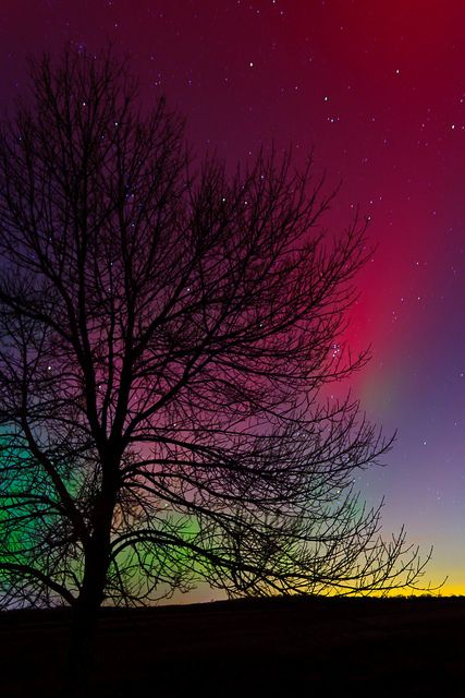Nature, Northernlights, Starry Night, Beautiful, Northern Lights, Aurora Borealis, A Tattoo, Night Sky, Photography